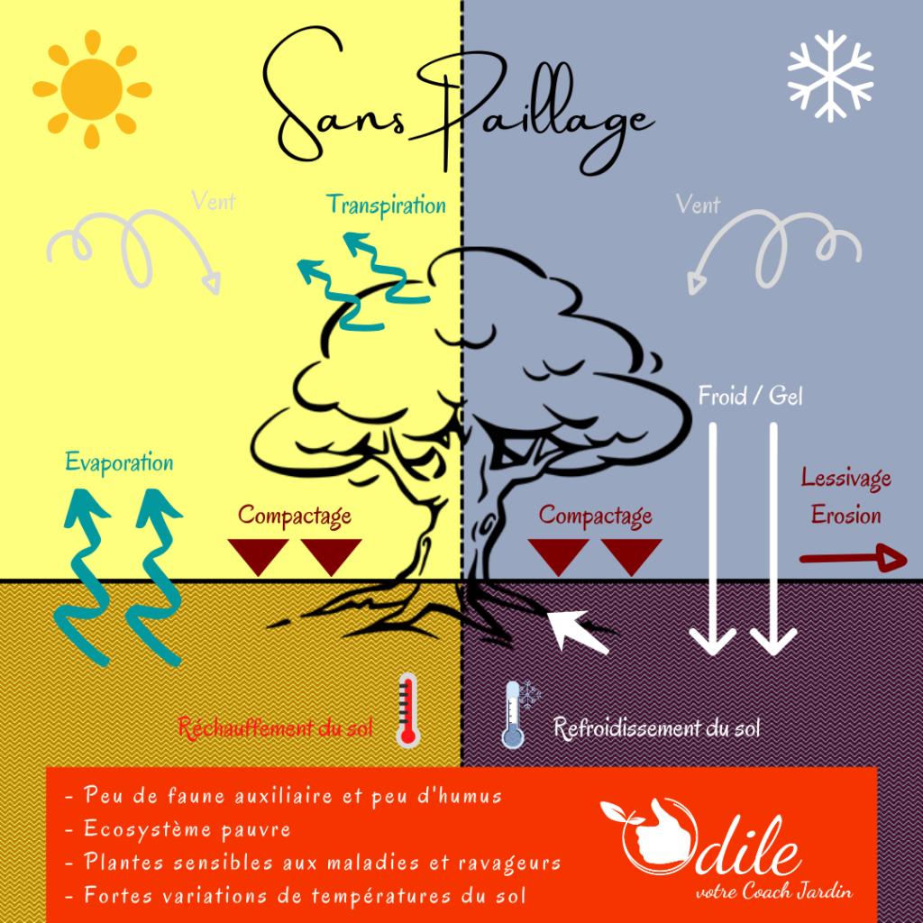 Infographie Odile, votre coach jardin - Sans paillage