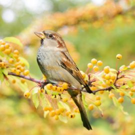 La haie libre… Trésor de biodiversité !