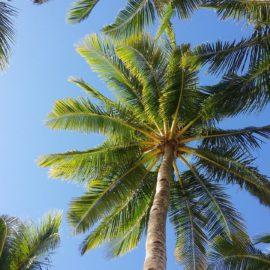 8 raisons de boycotter les palmiers